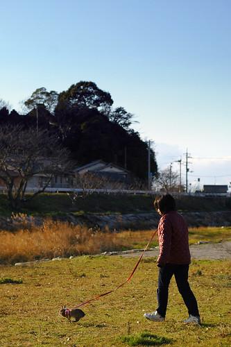 2011年初うさんぽ
