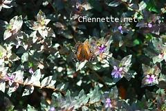 La Vega - Butterfly
