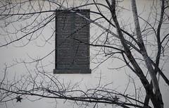 4/365 (ekelly80) Tags: blackandwhite bw house tree window stars washingtondc dc downtown shutters lafayettesquare 1411 project365 4365 decaturhouse january2011 3652011 january42011