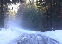 If you have to see your dentist ... (:Linda:) Tags: mist snow tree ice germany woods village curvy thuringia curve eis conifer kurve nadelbaum kurvig konifere strase brden landstrase koniferenimwinter landstrasenimschnee coniferinsnow