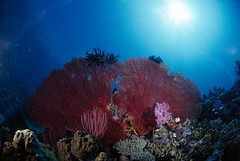 Bali diving Dive Concepts_029
