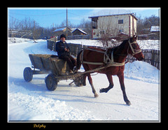 Horse cart with winter (DelphyE) Tags: winter horse snow cal romania cart iarna valcea oltenia caruta panoramafotogrfico peopleenjoyingnature