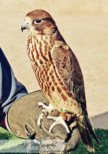 Birds Of Prey - Springs Preserve