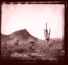 63. (OliviaGraceHird) Tags: california ranch old arizona cactus mountain sepia desert shrubbery