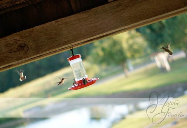 Hummingbirds through a Doorway
