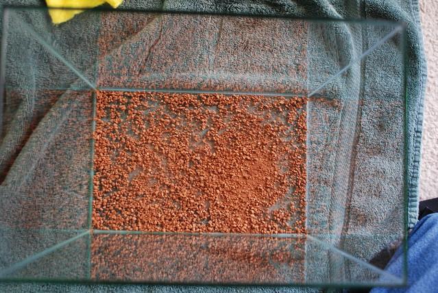 Utricularia nephrophylla Setup Progress 1