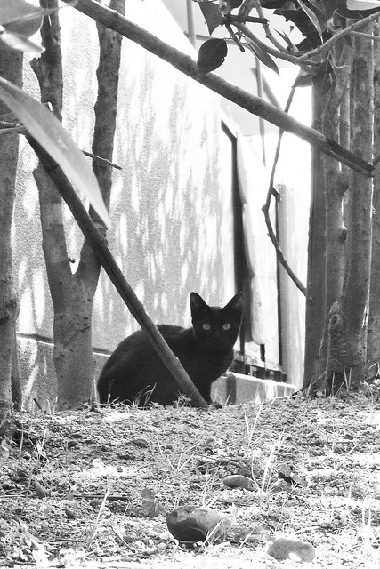 Today's Cat@2011-01-17