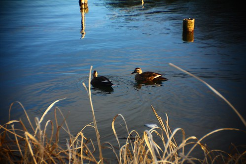 """DUCKs"" x1.5 TELE KT-1 + PC LENS IN A CAP"