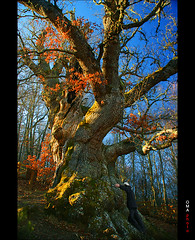 Chi exchange with magical millenarian oak / Intercambio de Qi con el mgico roble milenario. (OMA photo) Tags: espaa oak spain chi magical exchange qi mgico palencia intercambio reiki roble milenario vitalenergy millenarian roblndeestalaya energavital