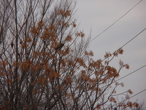 Tree with Golden Leaves and Grey Sky