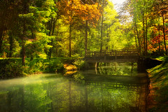 Autumn story (Dejan Hudoletnjak) Tags: autumn forest landscape bridge reflections water river lake colorful bio uncultivated nature fall spring springtoautumn magical