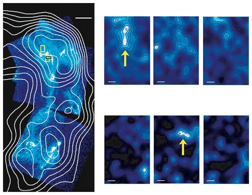 Chandra images of supernova remnant RXJ1713.7-3946