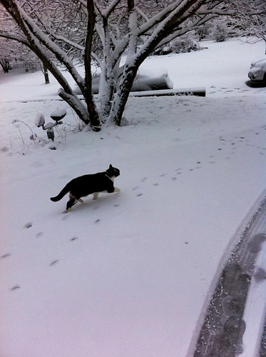 kitty in the snow.