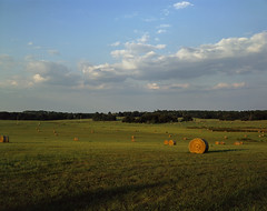Haybales (m.sowers) Tags: color film field grass slide chrome 4x5 positive hay e6 largeformat haybales schneider calumet astia cambo reversal symmars epsonv700