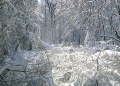 34 Trees 012611 (Jennie Ivins) Tags: trees winter white snow forest newjersey woods blizzard frosting mercercounty
