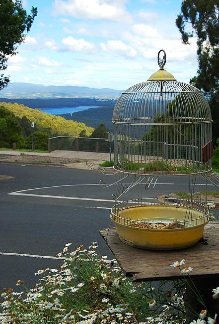 _australian_cage_