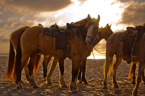 Horsing around on Rosarito Beach