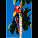 Scarlet macaw - Corcovado National Park - Costa Rica