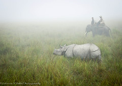 Kaziranga National Park (viwehei) Tags: india cute animal animals fog fauna nationalpark asia indian foggy safari rhino rhinos elephants assam kaziranga earthasia