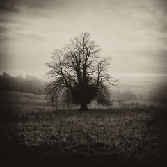 Alien (Andrew Lockie) Tags: winter england mist english weather fog rural dark square landscape book scenery noir sinister broadway atmosphere nopeople scene cotswolds vista typical singletree lonetree forlorn escarpment cotswold fishhill cotswoldlifemagazine leiceuserforum2012book luf2012