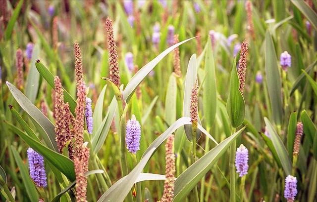 カラフルな植物のフリー写真素材