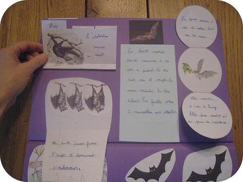 photos site lapbook Chauve souris11