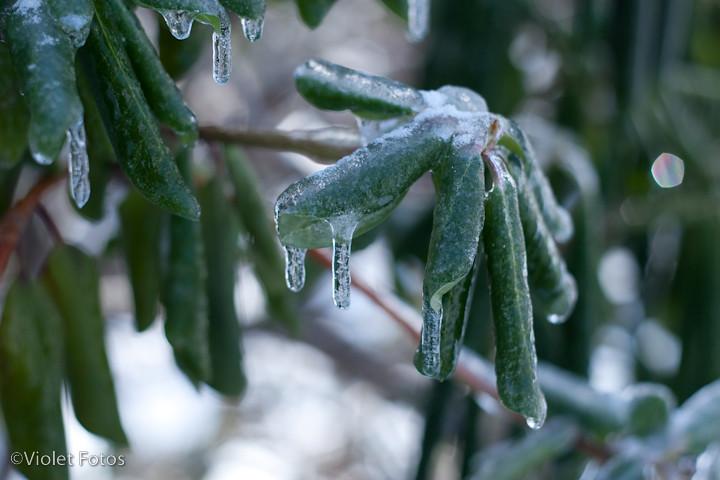 Winter_110203-7