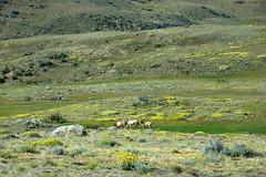a point of view (IngeKhn) Tags: horses verde green argentina sony estancia cavalos elcalafate dsch7 sonydsch7 provnciadesantacruz