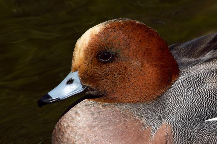 020611_zoo_bird07