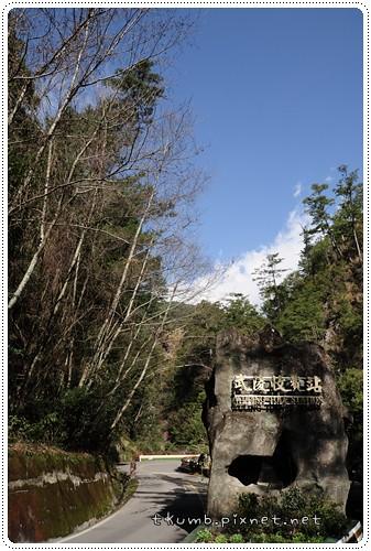 武陵賞櫻 (3).JPG