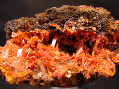 Crocoite (The Resistance Image Library) Tags: red color nature beauty rock museum compound nice pretty gallery natural display personal crystal australia structure collection minerals mineral tasmania colourful dundas information lead interest naturalwonders element specimen collector reference chemical inorganic crystalline geological chromium crocoite mineralogy chromate locality rockhound mineralogical sulphate crystallinestructure monoclinic macromarvels naturallyoccurring adelaidemine geometricspatialarrangement resistance2010