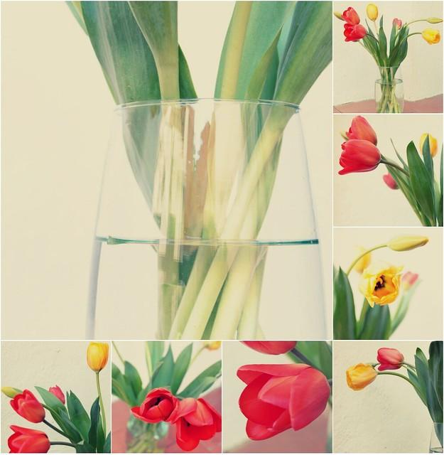 Flores para esta semana... tulipanes