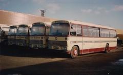 Tantivy Vega 31 line up (Coco the Jerzee Busman) Tags: uk bus bedford coach all transport jersey sb types dominant tantivy duple vega31