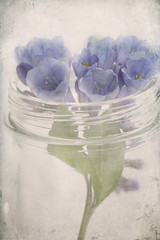 ... (..Ania.) Tags: flowers stilllife bluebells textured virginiabluebells kimklassentexturethankyou