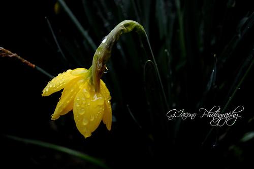 rain comes down