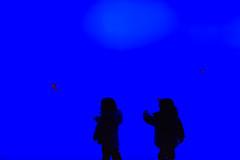 060/365 - March 1, 2011 - Twenty Thousand Leagues (Shane Woodall) Tags: blue shadow newyork silhouette brooklyn 35mm coneyisland aquarium march twins jellyfish lily ella 365 2011 project365 canon5dmarkii 3652011 shanewoodallphotography