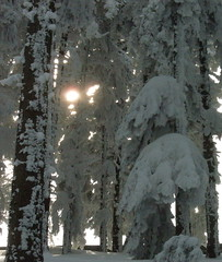 in a forest (masha2606) Tags: wood trees winter sunset sun white snow nature beautiful forest dark olympus belgrade 1001nights sunrays paysage zima priroda beograd musictomyeyes srbija masha2606 flickrbronzeaward highqualityimage realgem mashafrombelgrade olympusu1060 masha2606frombelgrade olympus1060s 1001nightsmagiccity mygearandme olympus1060s 1060 1060s masha2606belgrade