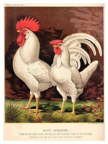 017-The illustrated book of poultry. With practical scheduals…1890-Lewis Wright
