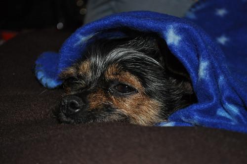 Sleepy Elphie