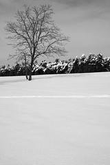 January (iananovich) Tags: trees white snow storm black tree lines cloudy january tracks line lone