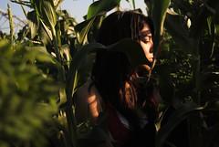 H for Hidden (xoandrea101xo1) Tags: light sunset shadow sky plants nature girl field corn farm hidden hide closedeyes abcchallenge