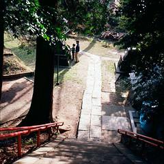 (masaaki miyara) Tags: trees light shadow 6x6 stairs march shrine yokohama   planar    hasselblad500cm kodakportra400nc  2011   miyaramasaaki