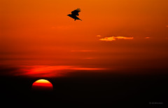 Eleutheria (sunshine is shinning) (Ahio) Tags: sunset sky birds silhouettes smcpentaxda300mmf40edifsdm