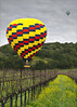 Mustard Season (walking along) Tags: balloons vineyard mustard g11