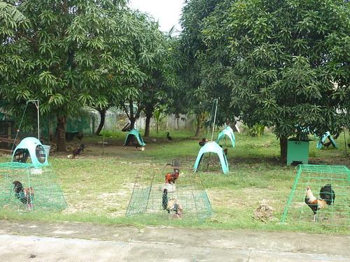 Bantayan-Tour de l'ile (15)