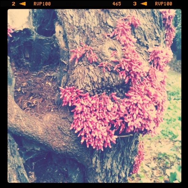 (320) El Árbol del Amor empieza a florecer