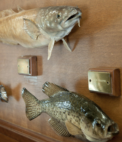 Fish of Michigan I