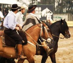 Campereando (Eduardo Amorim) Tags: brazil horses horse southamerica brasil criollo caballo cheval caballos mare cavalos pferde cavalli cavallo cavalo gauchos pferd riograndedosul hest mares hevonen brsil chevaux gaucho gua guas  yegua amricadosul hst yeguas gacho  amriquedusud  gachos  sudamrica suramrica amricadelsur  sdamerika esteio crioulo caballoscriollos criollos   americadelsud freiodeouro  crioulos cavalocrioulo americameridionale caballocriollo eduardoamorim cavaloscrioulos iayayam yamaiay guacrioula yeguacriolla guascrioulas yeguascriollas freiodeouro2010