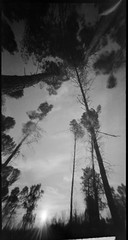 6x12 Gp3 pinhole-1-1 (david_ortega) Tags: bw byn film analgica wideangle pinhole homemade argentique estenopeica qumica 6x12 selfdevelop shanghaigp3100