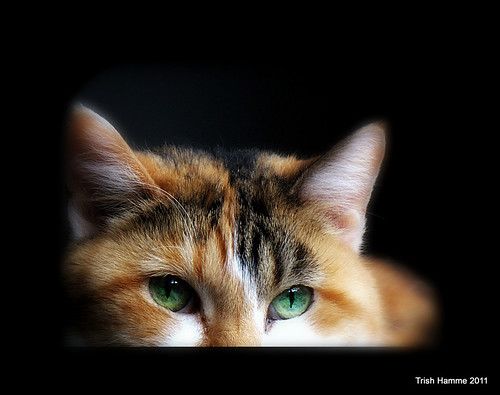 For My Jackie , Happy Caturday :)